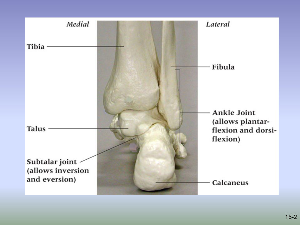 15-23 Tendinosis –Cause of Injury Singular cause or collection of mechanisms –Footwear, mechanics, trauma, overuse, limited flexibility –Signs of Injury Pain & inflammation Crepitus Pain with AROM & PROM –Care Rest, NSAIDs, modalities Orthotics for foot mechanic