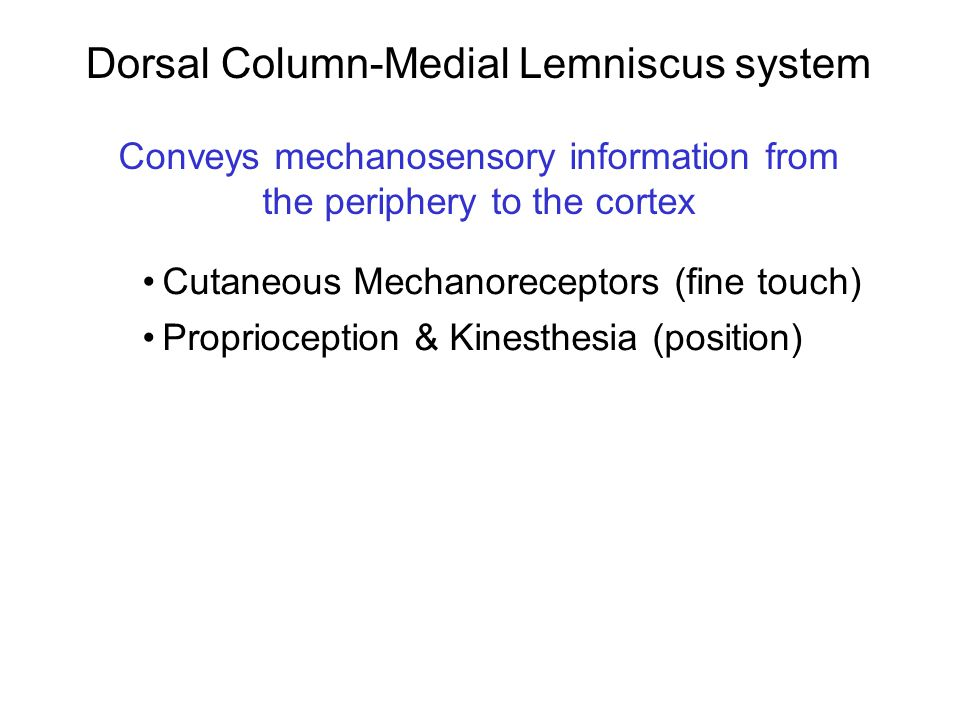 Dorsal Column-Medial Lemniscus system Conveys mechanosensory information from the periphery to the cortex Cutaneous Mechanoreceptors (fine touch) Prop