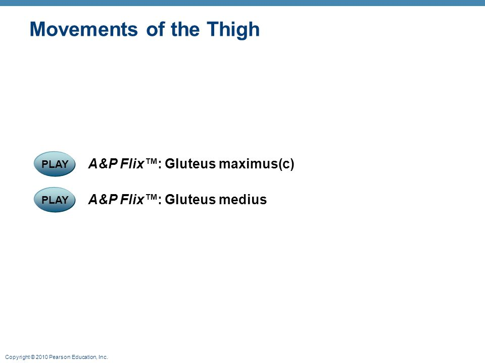 Copyright © 2010 Pearson Education, Inc. Movements of the Thigh PLAY A&P Flix™: Gluteus medius PLAY A&P Flix™: Gluteus maximus(c)