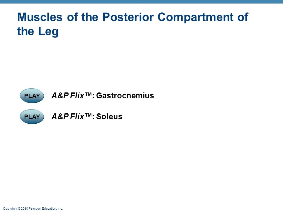 Copyright © 2010 Pearson Education, Inc. Muscles of the Posterior Compartment of the Leg PLAY A&P Flix™: Soleus PLAY A&P Flix™: Gastrocnemius