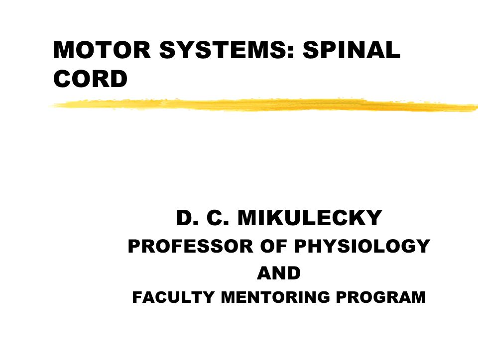MOTOR SYSTEMS: SPINAL CORD D. C. MIKULECKY PROFESSOR OF PHYSIOLOGY AND FACULTY MENTORING PROGRAM