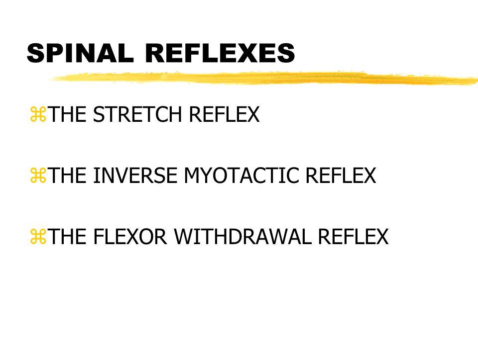 SPINAL REFLEXES zTHE STRETCH REFLEX zTHE INVERSE MYOTACTIC REFLEX zTHE FLEXOR WITHDRAWAL REFLEX