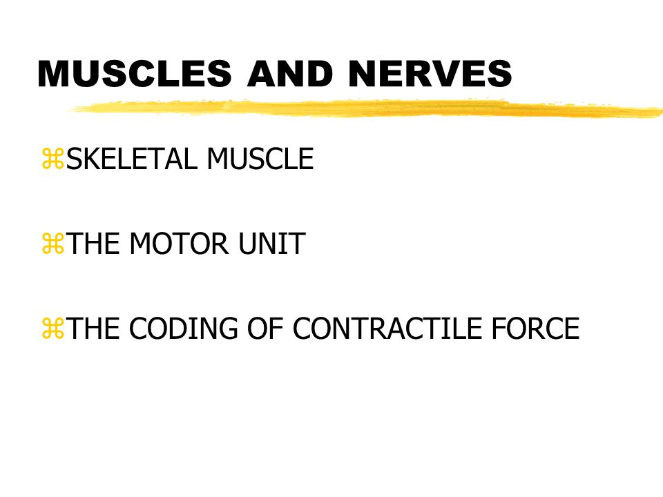 MUSCLES AND NERVES zSKELETAL MUSCLE zTHE MOTOR UNIT zTHE CODING OF CONTRACTILE FORCE