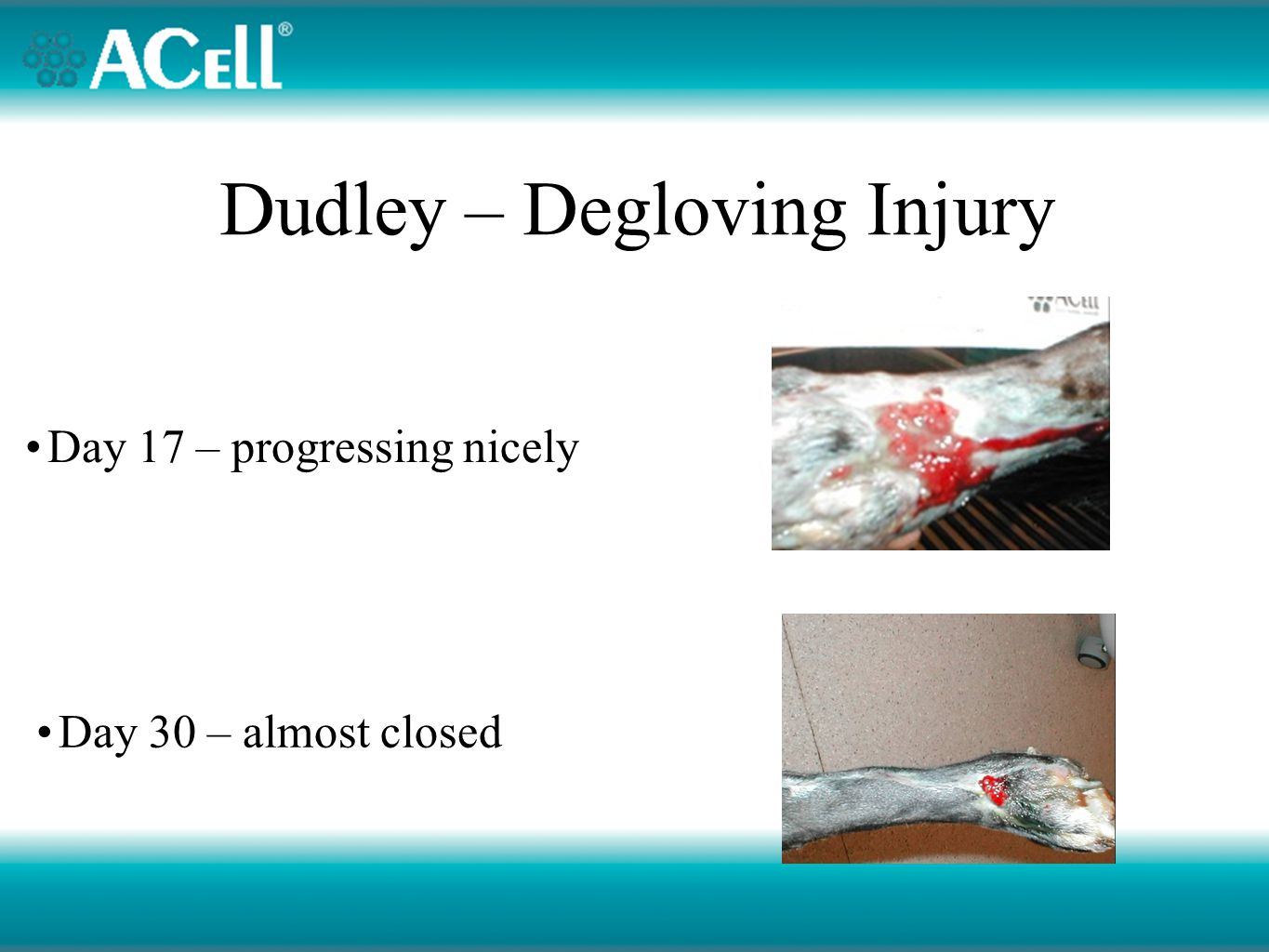 Dudley – Degloving Injury Day 17 – progressing nicely Day 30 – almost closed