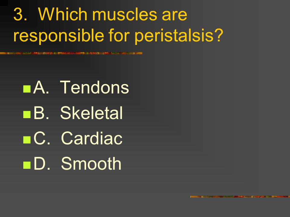 2. What attaches muscles to the bones? A. Striations B. Tendons C. Diaphragms D. Cardiacs