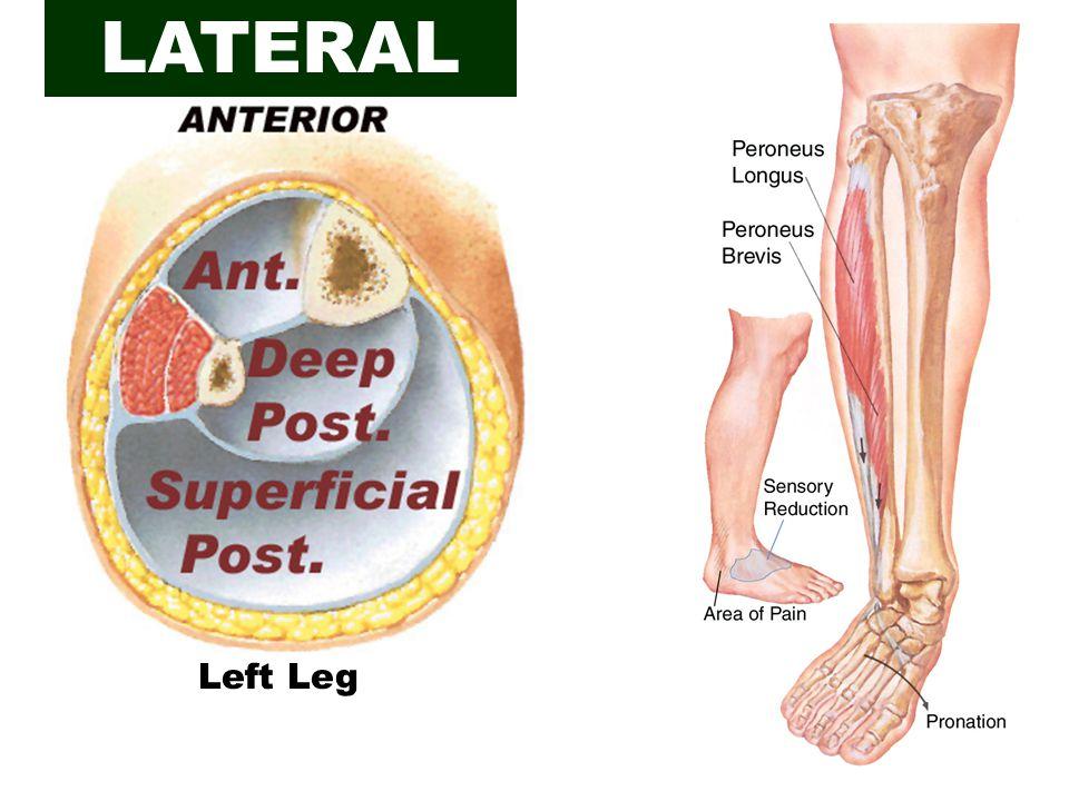 Left Leg LATERAL