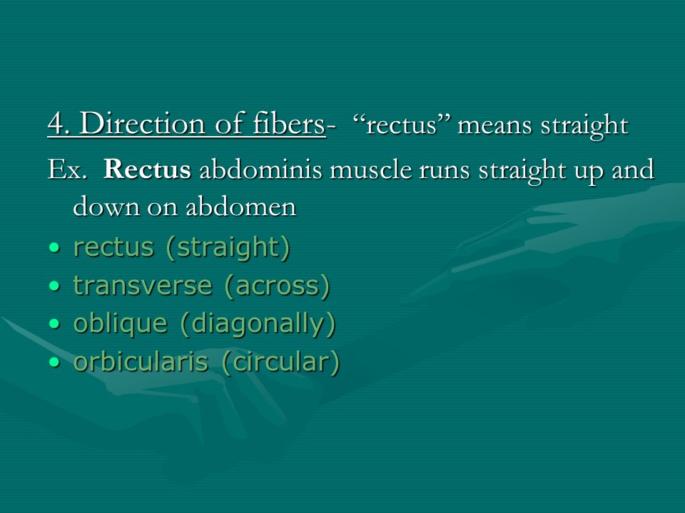 """3. Shape- """"delta"""" means triangle Ex. Deltoid on shoulder is triangular. deltoid (triangular)deltoid (triangular) rhomboid (like a rhombus with equal a"""