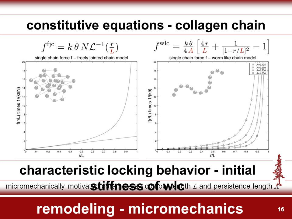16 remodeling - micromechanics constitutive equations - collagen chain characteristic locking behavior - initial stiffness of wlc micromechanically mo