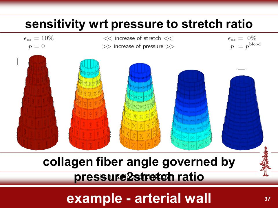 37 example - arterial wall sensitivity wrt pressure to stretch ratio collagen fiber angle governed by pressure2stretch ratio Kuhl & Holzapfel [2007]