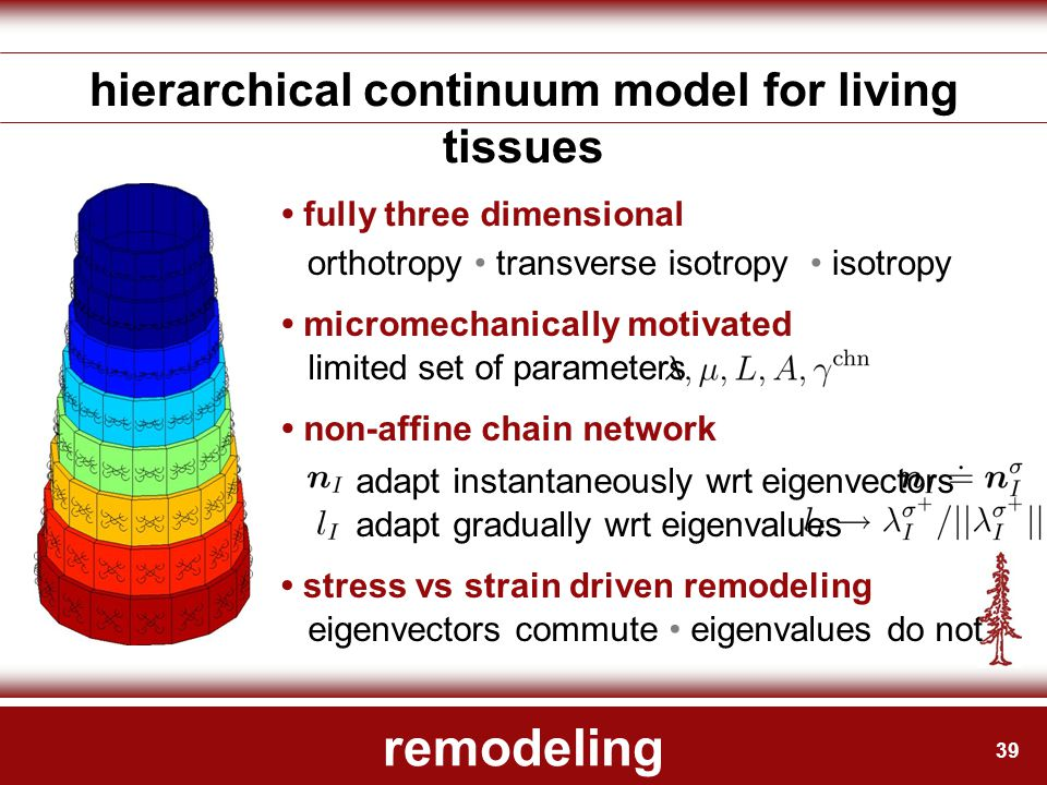 39 remodeling hierarchical continuum model for living tissues fully three dimensional micromechanically motivated non-affine chain network stress vs s