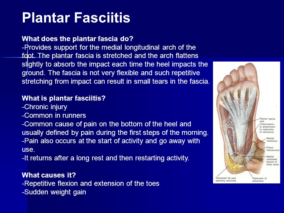 Plantar Fasciitis What does the plantar fascia do? -Provides support for the medial longitudinal arch of the foot. The plantar fascia is stretched and