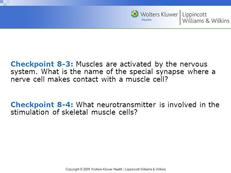 Copyright © 2009 Wolters Kluwer Health | Lippincott Williams & Wilkins Checkpoint 8-3: Muscles are activated by the nervous system.