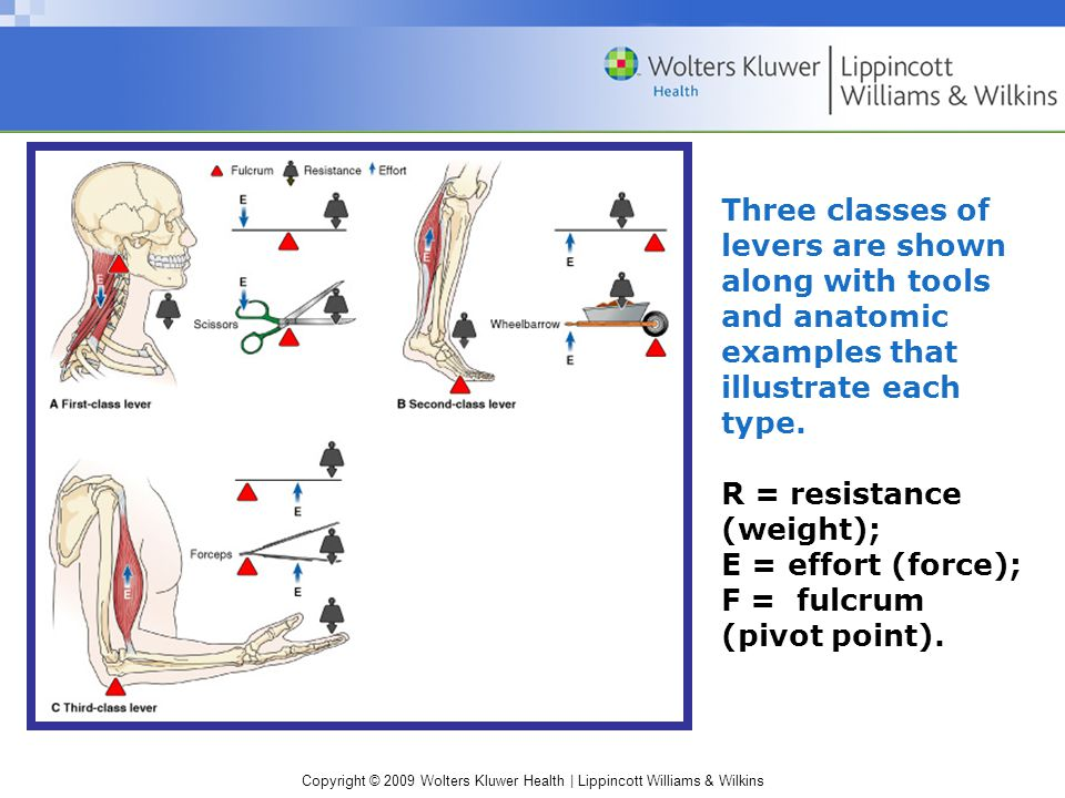 Copyright © 2009 Wolters Kluwer Health | Lippincott Williams & Wilkins Three classes of levers are shown along with tools and anatomic examples that illustrate each type.