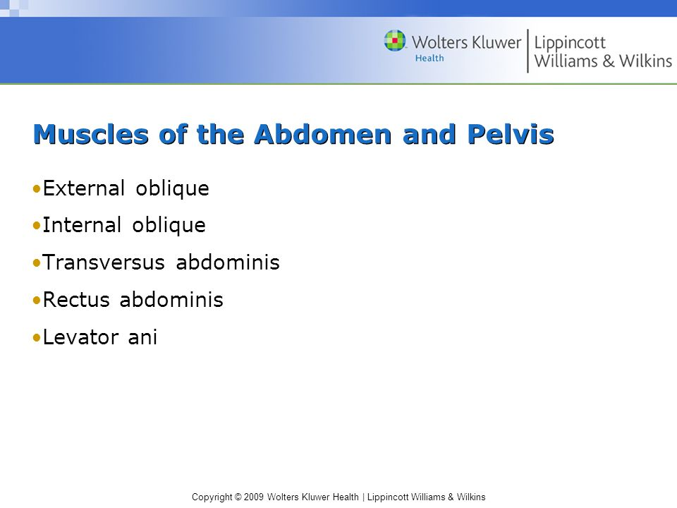 Copyright © 2009 Wolters Kluwer Health | Lippincott Williams & Wilkins Muscles of the Abdomen and Pelvis External oblique Internal oblique Transversus abdominis Rectus abdominis Levator ani