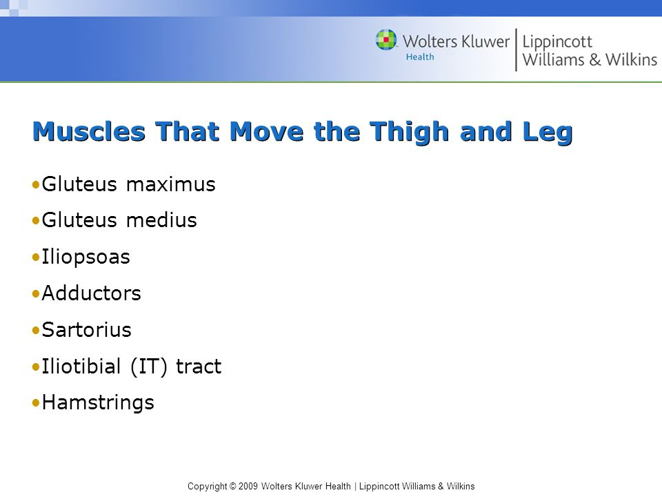 Copyright © 2009 Wolters Kluwer Health | Lippincott Williams & Wilkins Muscles That Move the Thigh and Leg Gluteus maximus Gluteus medius Iliopsoas Adductors Sartorius Iliotibial (IT) tract Hamstrings