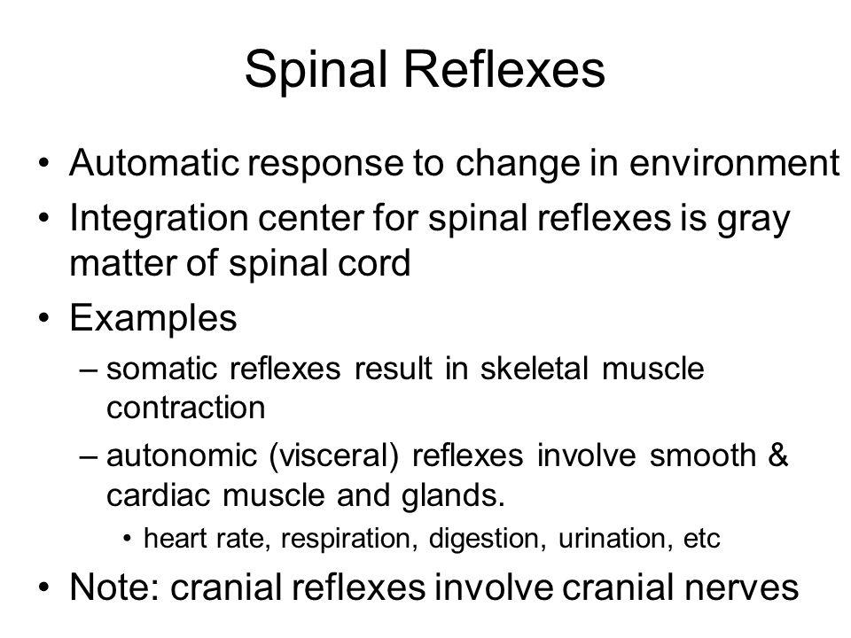 Reflex Arc Specific nerve impulse pathway 5 components of reflex arc –receptor –sensory neuron –integrating center –motor neuron –effector 4 important somatic spinal reflexes –stretch, tendon, flexor(withdrawal) & crossed extensor reflexes