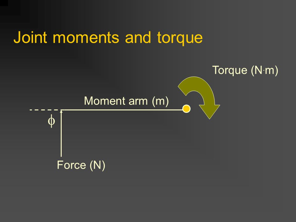 Joint moments and torque Force (N) Moment arm (m)  Torque (N. m)