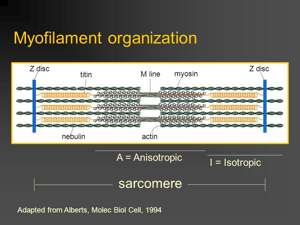 Membrane systems ++++++++ + + + + + + + + + + + + ---- - - - - - - + + + + + + - - - - - - - - - - - - ++ ---- Ca 2+