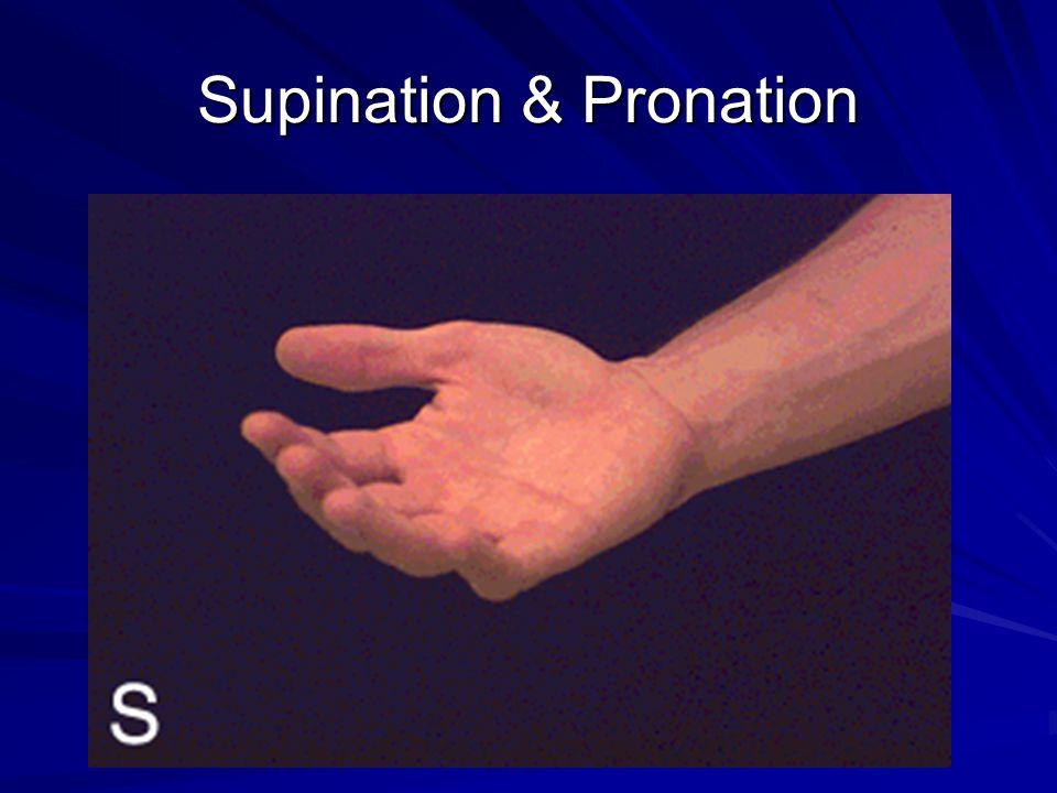Supination & Pronation