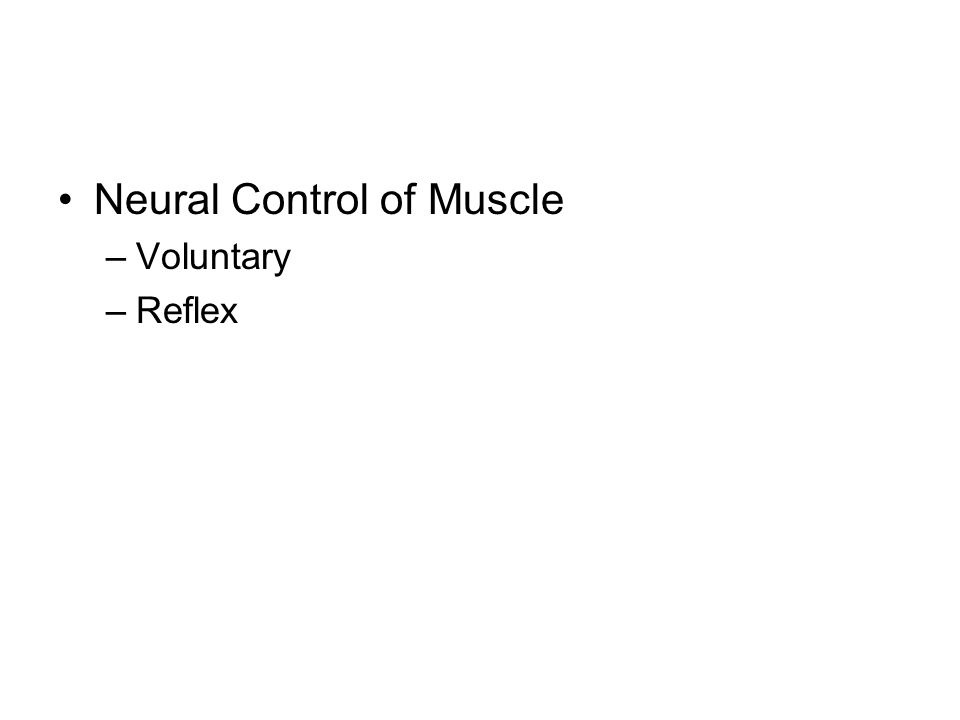 Neural Control of Muscle –Voluntary –Reflex