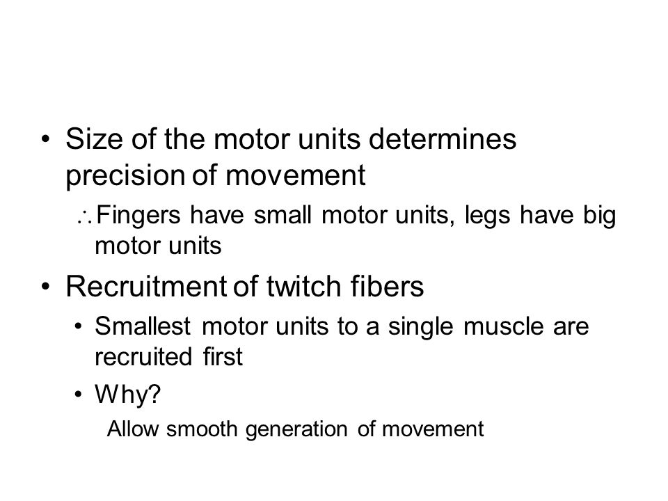 Size of the motor units determines precision of movement  Fingers have small motor units, legs have big motor units Recruitment of twitch fibers Smallest motor units to a single muscle are recruited first Why.