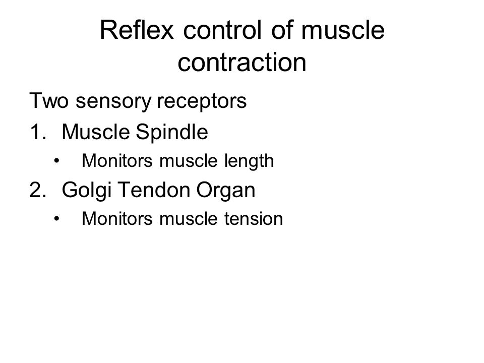 Reflex control of muscle contraction Two sensory receptors 1.Muscle Spindle Monitors muscle length 2.Golgi Tendon Organ Monitors muscle tension