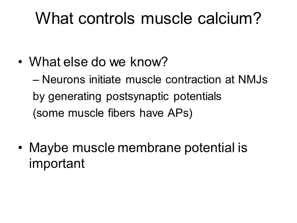 What controls muscle calcium. What else do we know.