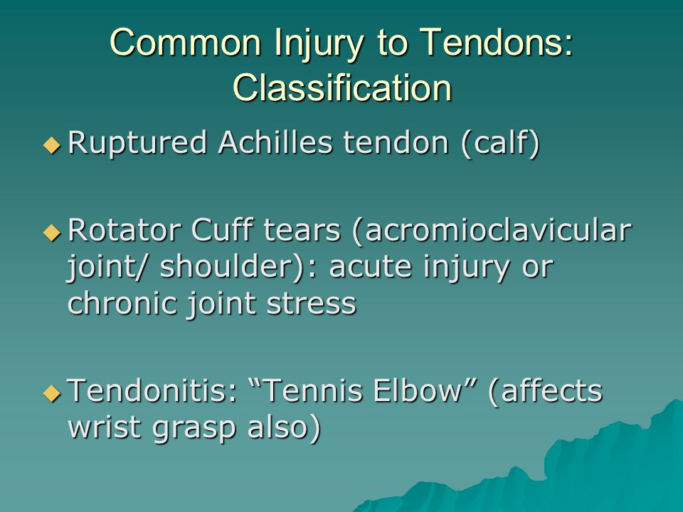 Common Injury to Tendons: Classification  Ruptured Achilles tendon (calf)  Rotator Cuff tears (acromioclavicular joint/ shoulder): acute injury or chronic joint stress  Tendonitis: Tennis Elbow (affects wrist grasp also)