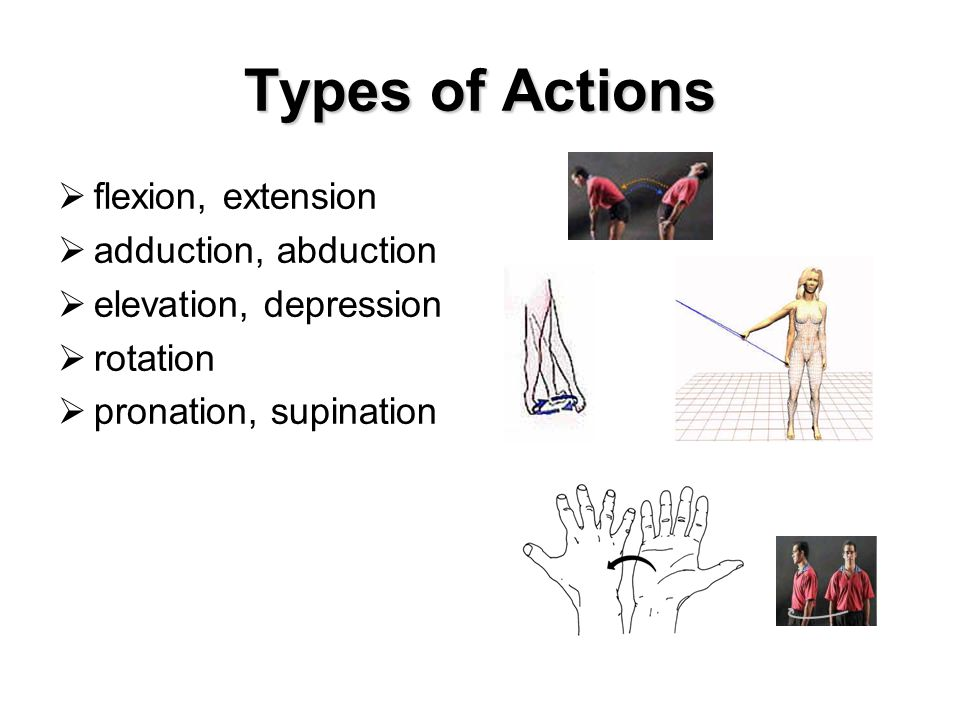 Types of Actions  flexion, extension  adduction, abduction  elevation, depression  rotation  pronation, supination