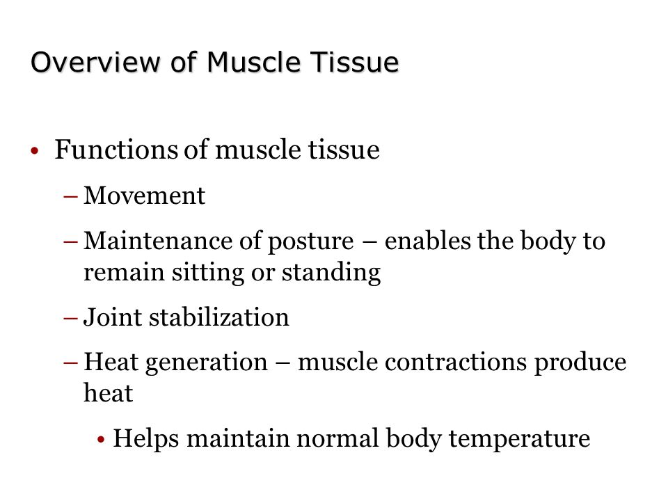 Overview of Muscle Tissue Functions of muscle tissue –Movement –Maintenance of posture – enables the body to remain sitting or standing –Joint stabilization –Heat generation – muscle contractions produce heat Helps maintain normal body temperature