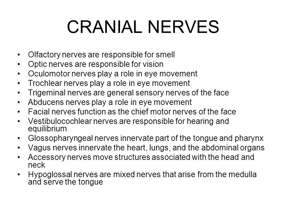 CRANIAL NERVES Olfactory nerves are responsible for smell Optic nerves are responsible for vision Oculomotor nerves play a role in eye movement Trochlear nerves play a role in eye movement Trigeminal nerves are general sensory nerves of the face Abducens nerves play a role in eye movement Facial nerves function as the chief motor nerves of the face Vestibulocochlear nerves are responsible for hearing and equilibrium Glossopharyngeal nerves innervate part of the tongue and pharynx Vagus nerves innervate the heart, lungs, and the abdominal organs Accessory nerves move structures associated with the head and neck Hypoglossal nerves are mixed nerves that arise from the medulla and serve the tongue
