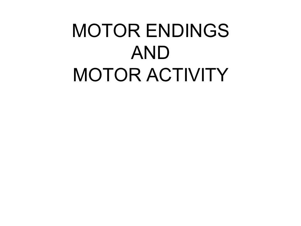 MOTOR ENDINGS AND MOTOR ACTIVITY