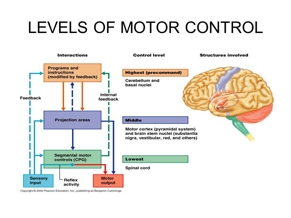 LEVELS OF MOTOR CONTROL