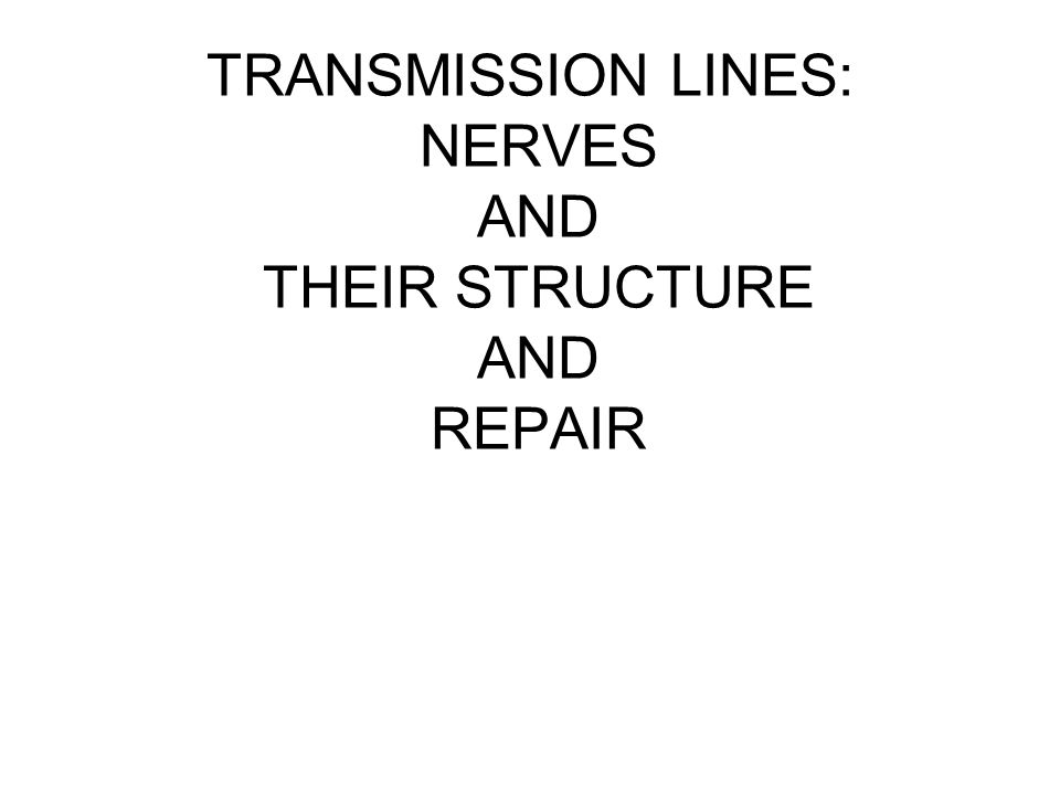 TRANSMISSION LINES: NERVES AND THEIR STRUCTURE AND REPAIR