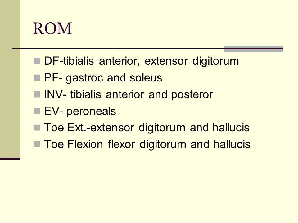 ROM DF-tibialis anterior, extensor digitorum PF- gastroc and soleus INV- tibialis anterior and posteror EV- peroneals Toe Ext.-extensor digitorum and hallucis Toe Flexion flexor digitorum and hallucis