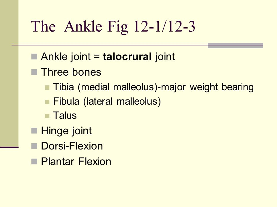The Ankle Fig 12-1/12-3 Ankle joint = talocrural joint Three bones Tibia (medial malleolus)-major weight bearing Fibula (lateral malleolus) Talus Hing