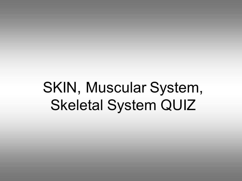 SKIN, Muscular System, Skeletal System QUIZ