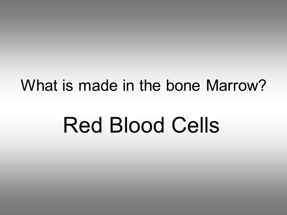 What is made in the bone Marrow Red Blood Cells