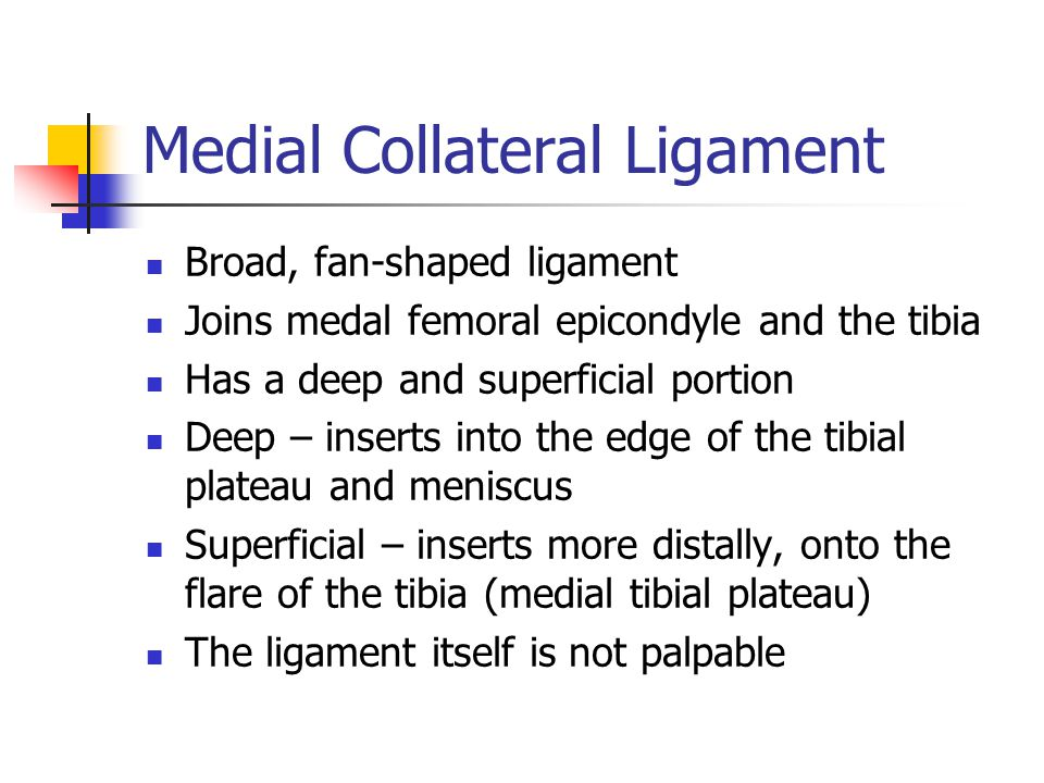 Medial Collateral Ligament Broad, fan-shaped ligament Joins medal femoral epicondyle and the tibia Has a deep and superficial portion Deep – inserts i