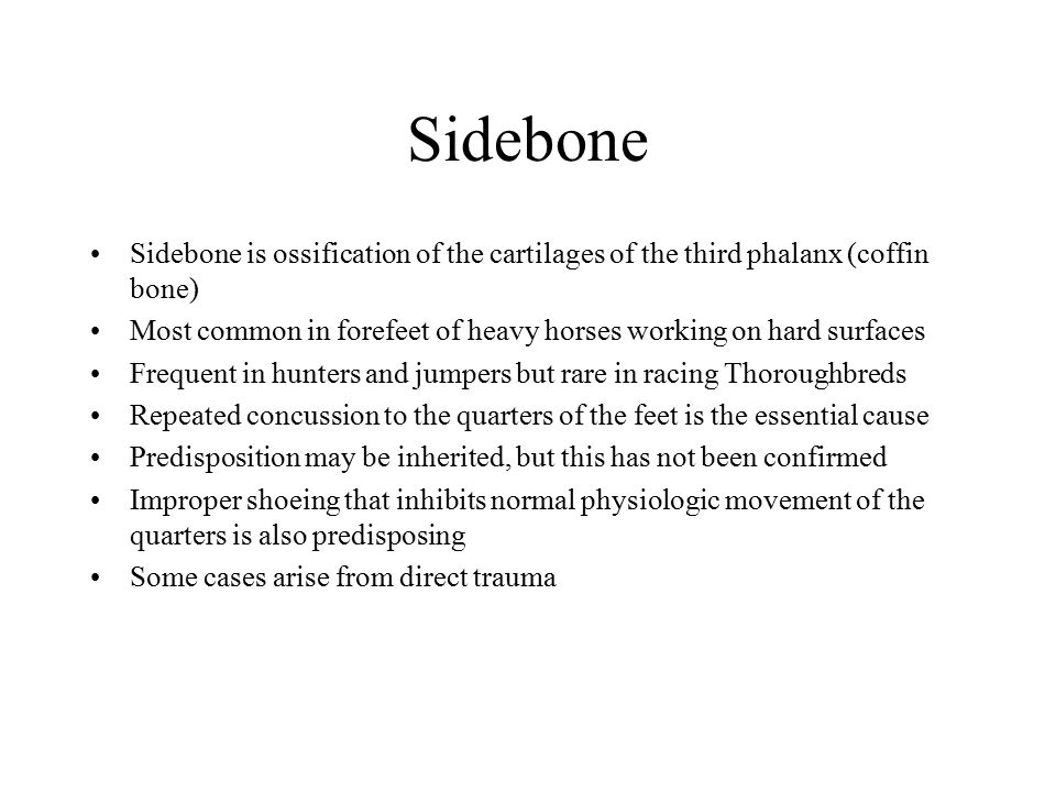 Sidebone Sidebone is ossification of the cartilages of the third phalanx (coffin bone) Most common in forefeet of heavy horses working on hard surface