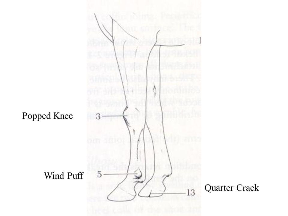 Popped Knee Wind Puff Quarter Crack