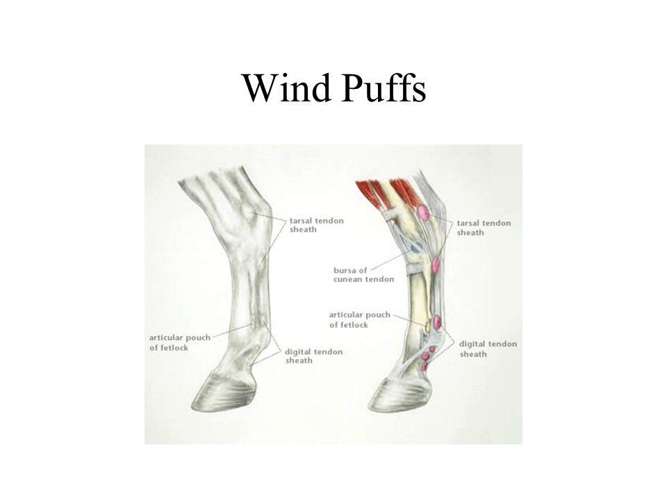 Wind Puffs