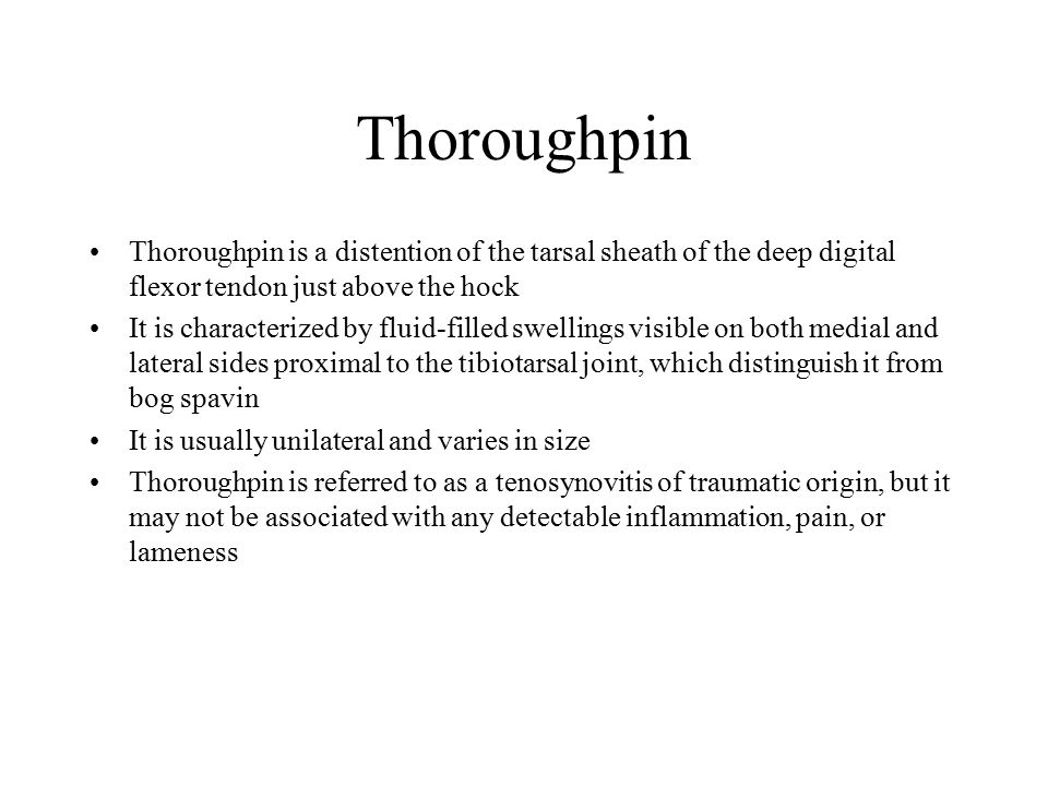 Thoroughpin Thoroughpin is a distention of the tarsal sheath of the deep digital flexor tendon just above the hock It is characterized by fluid-filled