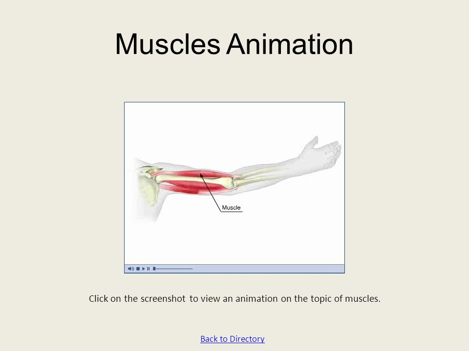 Muscles Animation Click on the screenshot to view an animation on the topic of muscles. Back to Directory