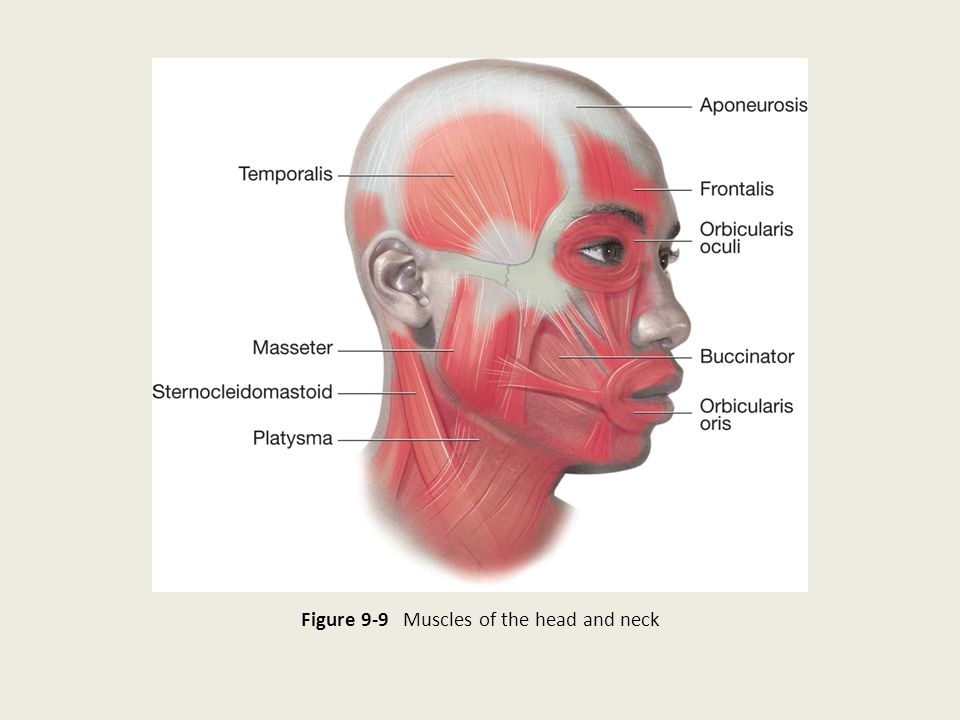 Figure 9-9 Muscles of the head and neck