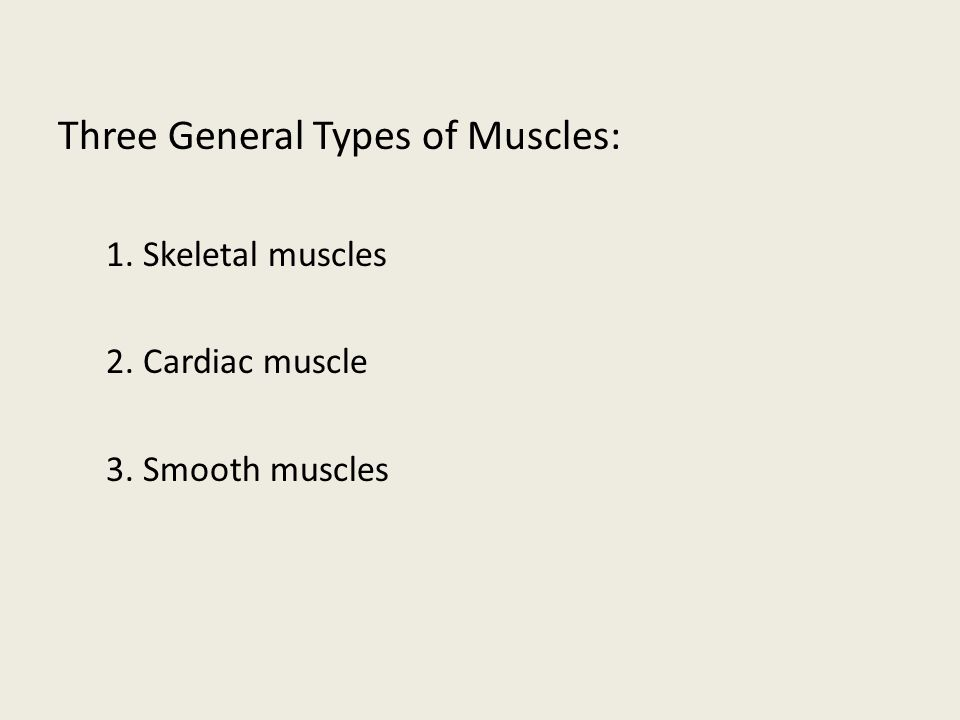 Three General Types of Muscles: 1. Skeletal muscles 2. Cardiac muscle 3. Smooth muscles