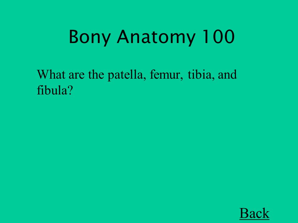Bony Anatomy 100 What are the patella, femur, tibia, and fibula Back