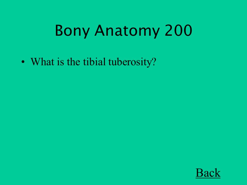 Bony Anatomy 200 What is the tibial tuberosity Back