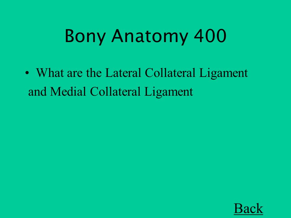 Bony Anatomy 400 What are the Lateral Collateral Ligament and Medial Collateral Ligament Back