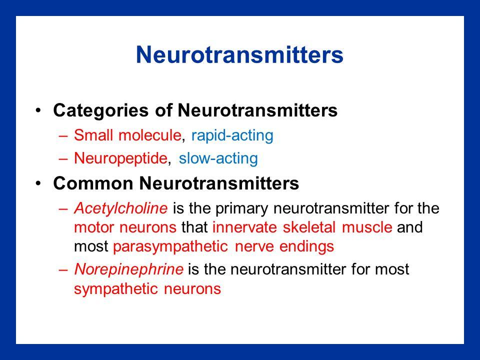 Neurotransmitters Categories of Neurotransmitters –Small molecule, rapid-acting –Neuropeptide, slow-acting Common Neurotransmitters –Acetylcholine is